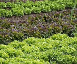 Huertos y cultivos particulares