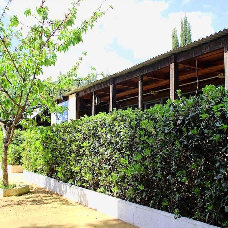 Residencia Canina: Servicios de Centre Caní De Pedracastell