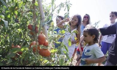 Cómo enseñar a los niños a amar la naturaleza