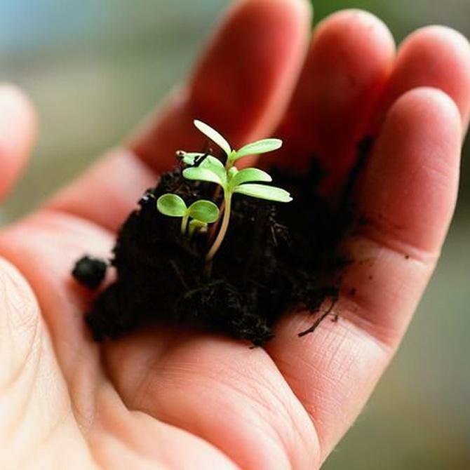 Jardinería minimalista y sostenible al alcance de tu mano