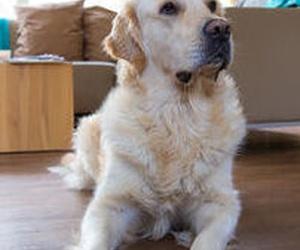 ¿Cómo ayudar a que nuestro perro sea feliz cuando se queda solo en casa?