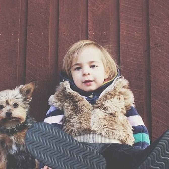 ¿Qué perros conviven mejor con los niños?