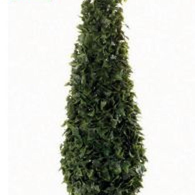 árbol hiedra cono