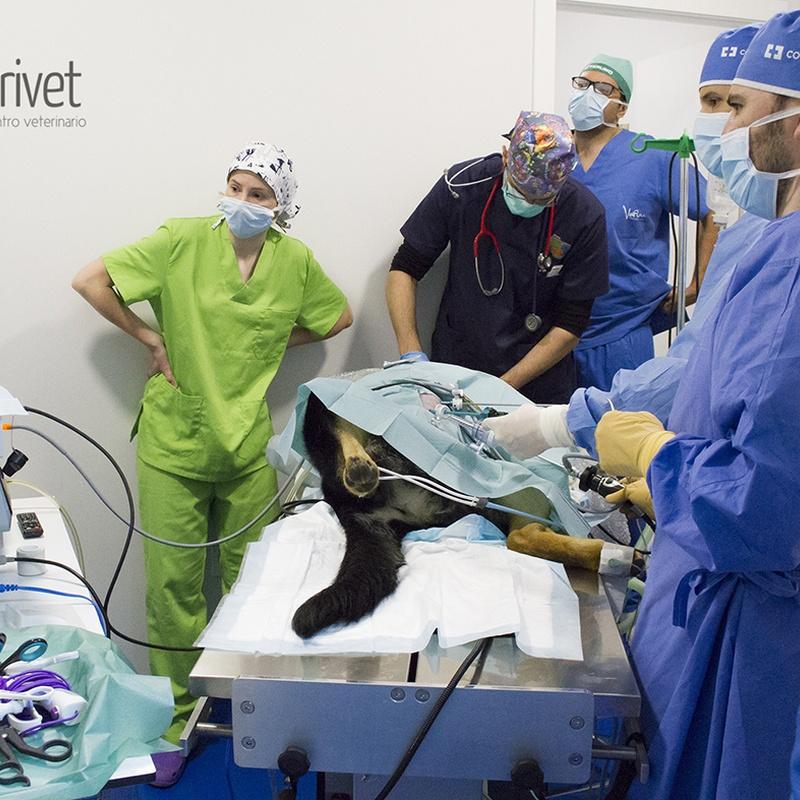 Servicios externos: laparoscopia, traumatología, ecocardiografía...: Servicios de Centro Veterinario Trivet