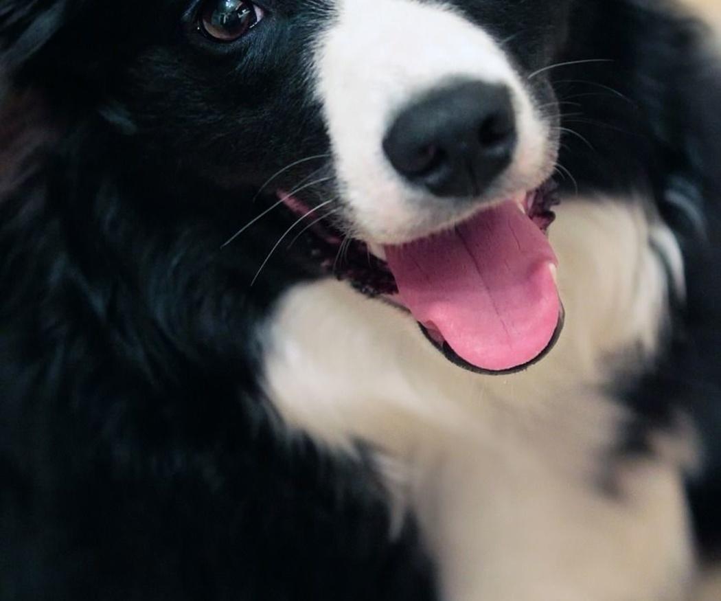 ¿Qué significan los estornudos de los perros?
