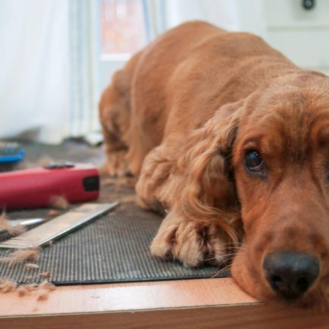 ¿Qué corte hacer para tu perro?