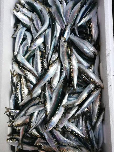 Parrocha: SERVICIOS de Pescastur