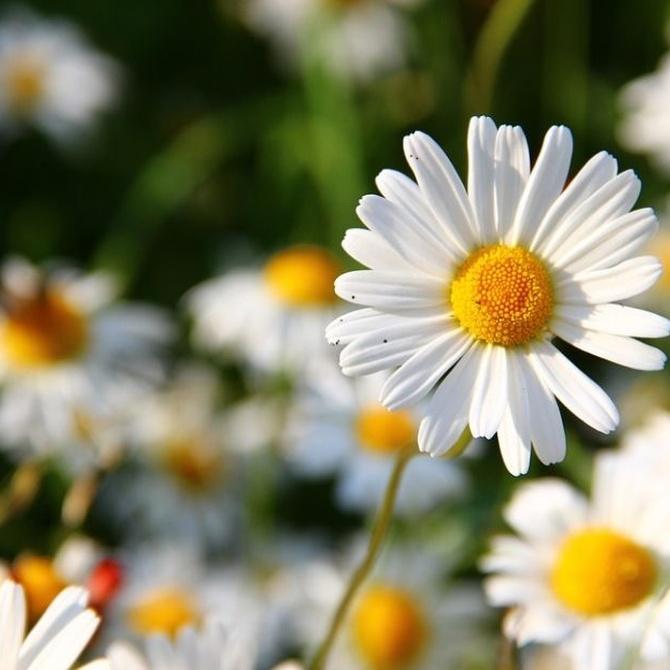 ¿Qué flores se pueden plantar en invierno?