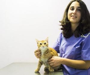 Veterinarios especializados en dermatología en Tenerife