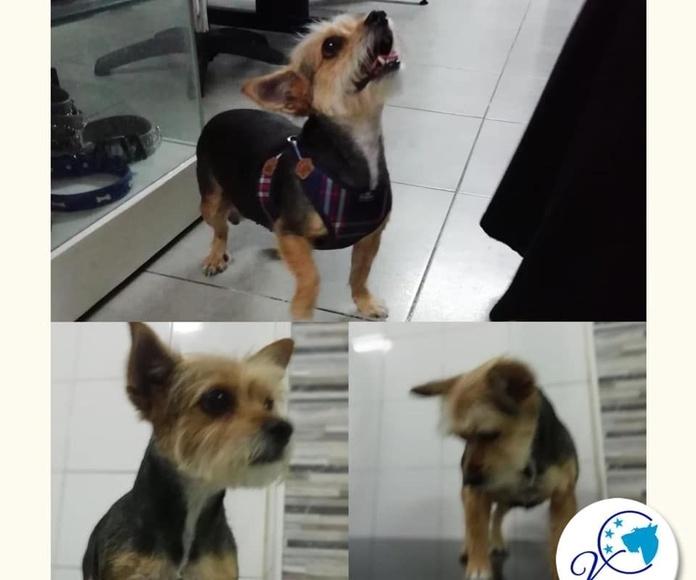 Dispensador de golosinas para mascotas: Servicios de Vetercan