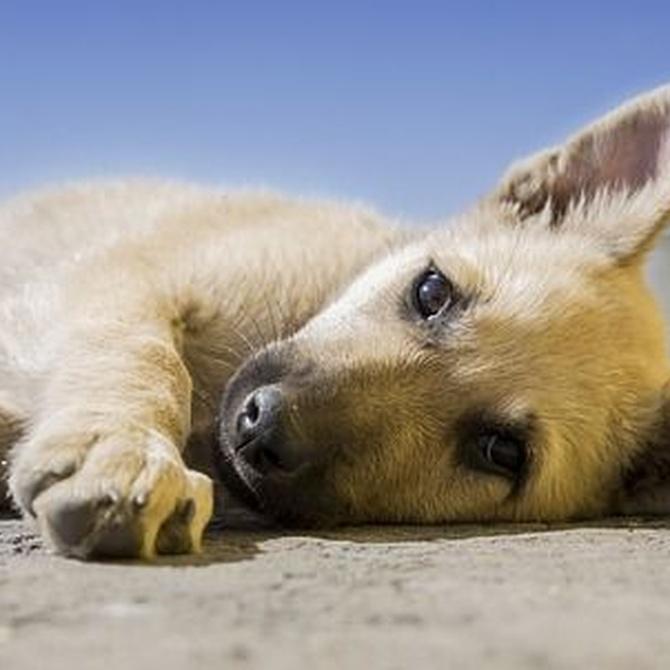 ¿Cómo tendrá que alimentarse tu cachorro?