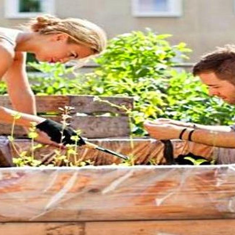 Cultiva tu propio huerto :  de Huertos Azor