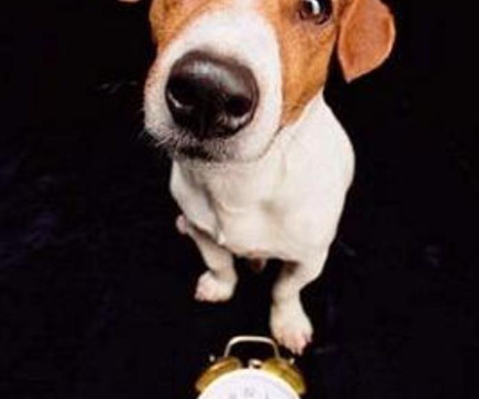 Mi perro y el cambio de hora