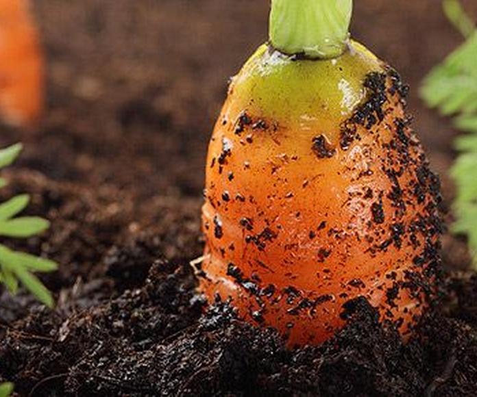 Herbicidas: Productos de Semiagro