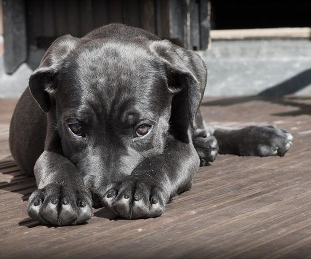 ¿Qué alimentos son nocivos para tu perro?