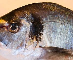 Venta al por mayor de pescado en Las Palmas