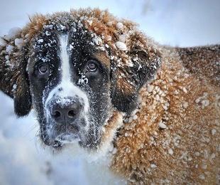 ¿Es suficiente el pelaje de tu perro para el invierno?