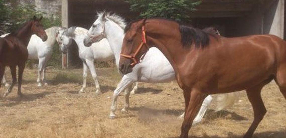 Paseos a caballo con expertos en Sevilla