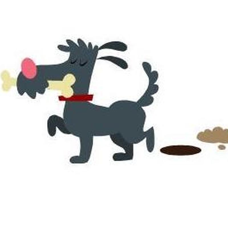 Cuidado de perros en CV Symay