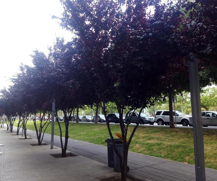 Árboles florecidos desde la terraza de A la Cazuela