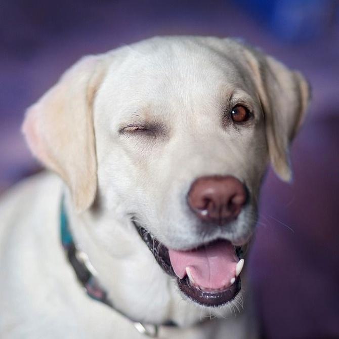 Cuida la dentadura de tu mascota