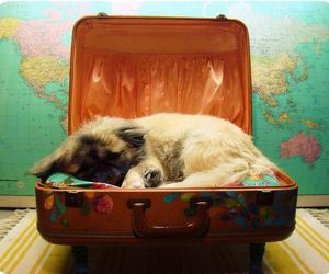 Requisitos legales para viajar con mascotas a otros países