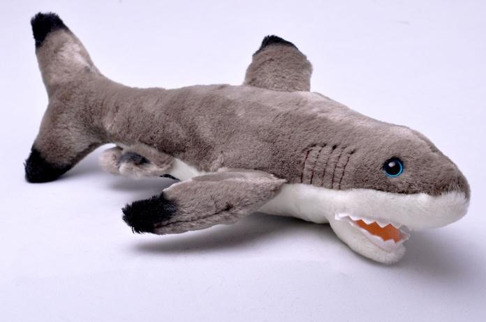 Tiburón pequeño