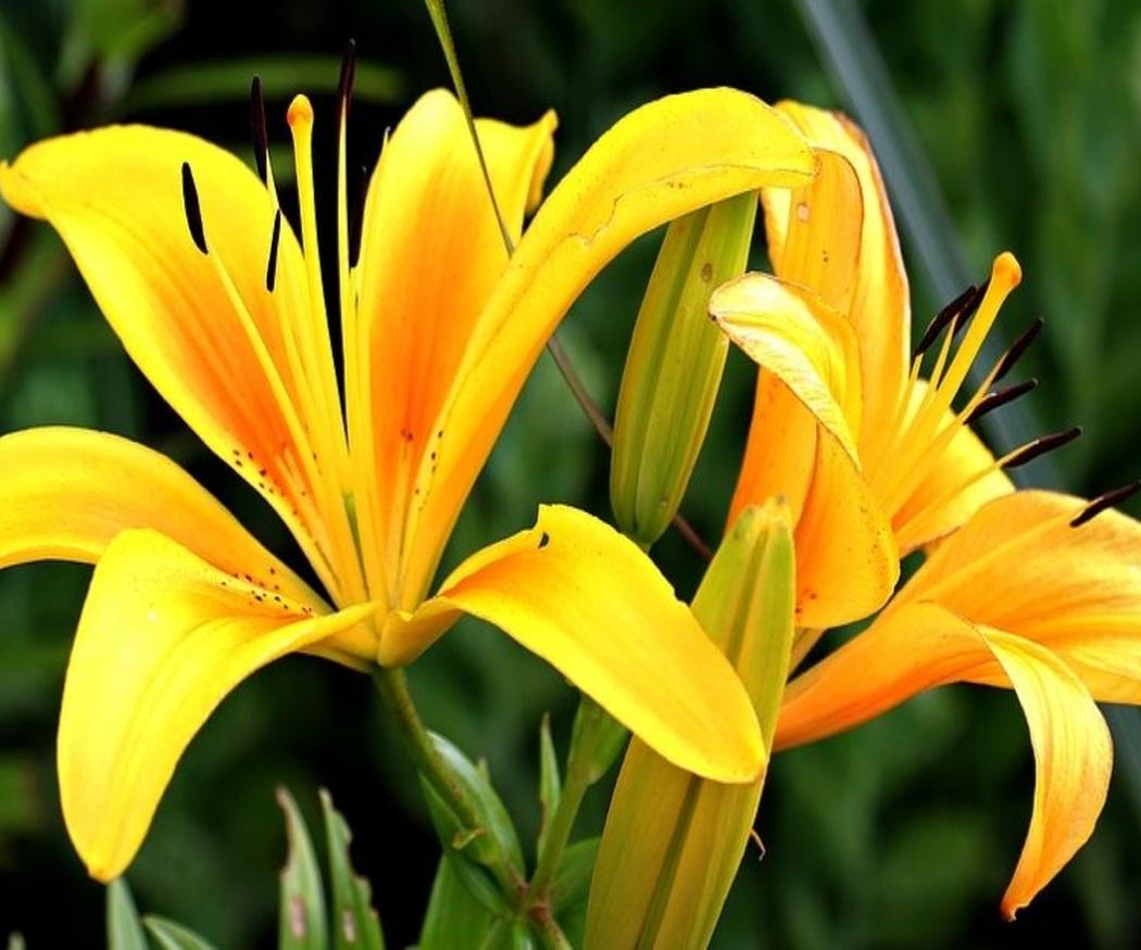 Las flores más aconsejables para una boda en otoño o invierno