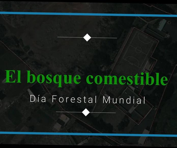 CONSTRUYENDO UN BOSQUE Y SUMIDERO DE CARBONO: Proyectos y Servicios of Asociación Domitila