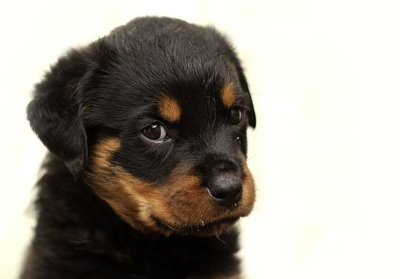 Perros: Mila-Bierzoo