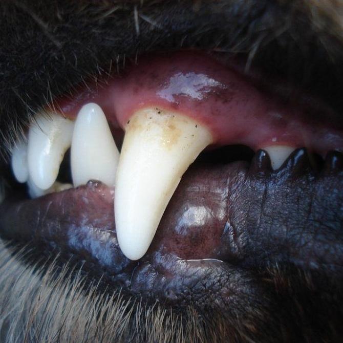 ¿Qué hacer para tener un perro potencialmente peligroso?