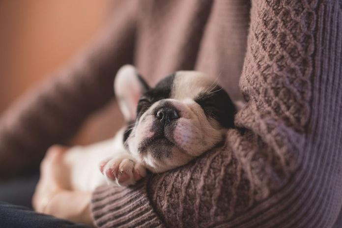 Mascotas: Correduría y asesoría de Seguros Vázquez Montequinto