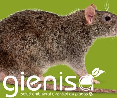 Eliminar ratas y ratones. Desratización en Alicante