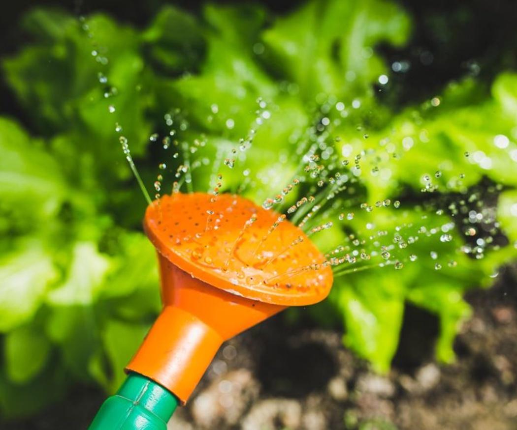 Cuidados del jardín en verano