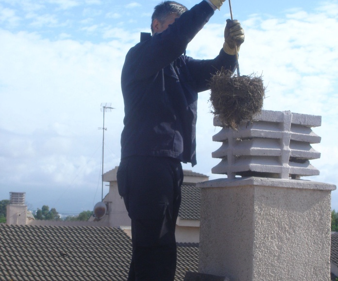 Extracción resto de nido.