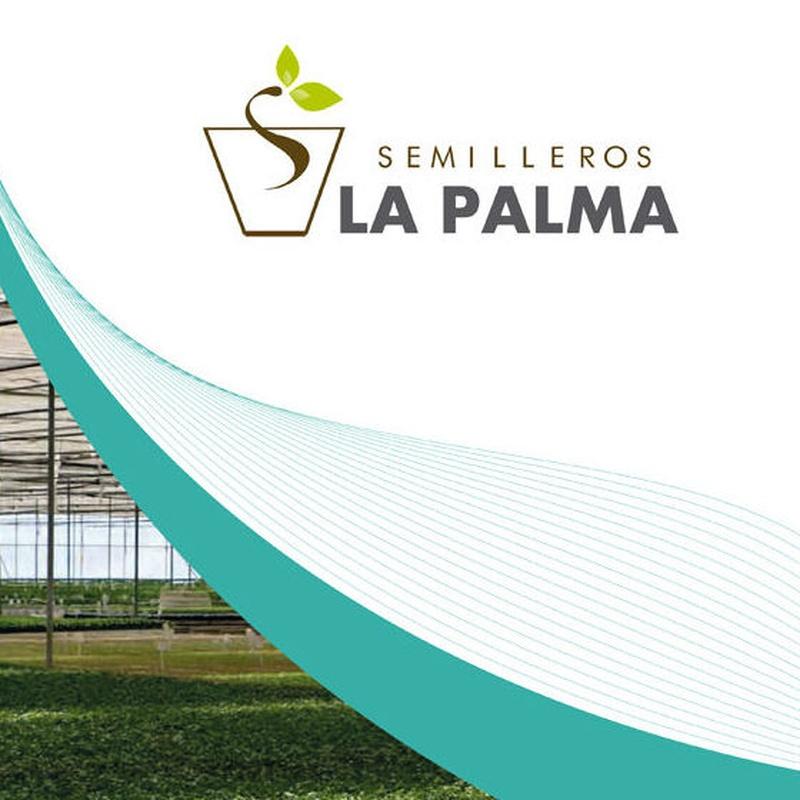 Catálogo de plantas aromáticas: Productos de Garden La Palma