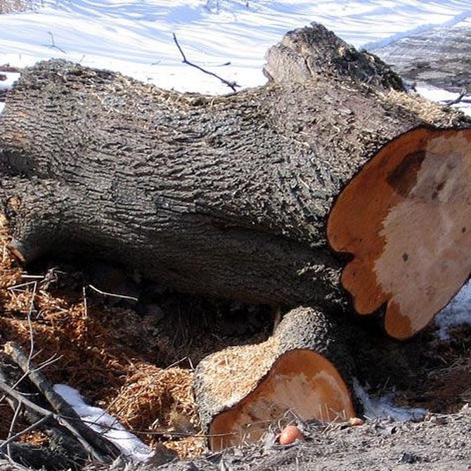 Importancia y usos de la madera