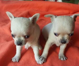 Adiestramiento perros: Productos y servicios de Don Perro