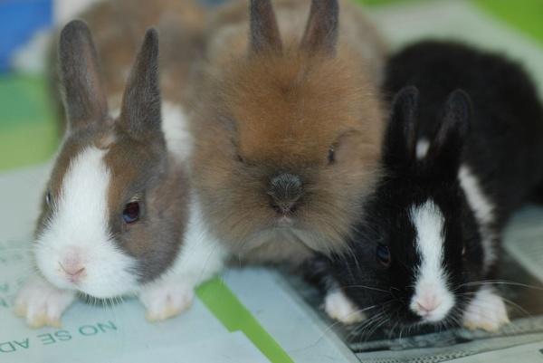 Conejos: Catálogo de Interzoo Guadalajara