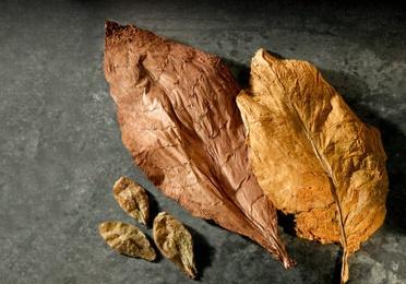 Presentaciones especiales de puros