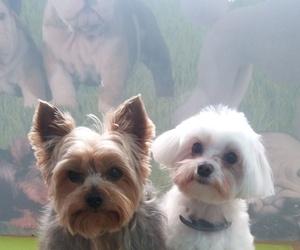 Peluquería canina Elche