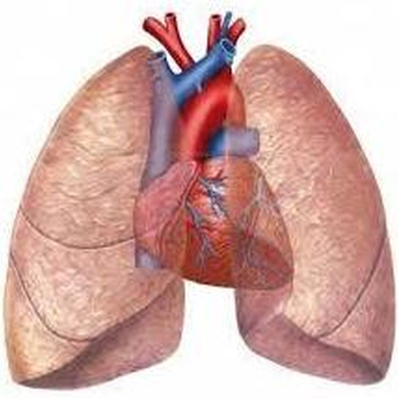 Problemas respiratorios y circulatorios: Tratamientos de Centro de Fisioterapia Pascual & Barbarin