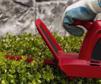 DISEÑO DE JARDINES: Servicios de Acebo y Lavanda Jardineros