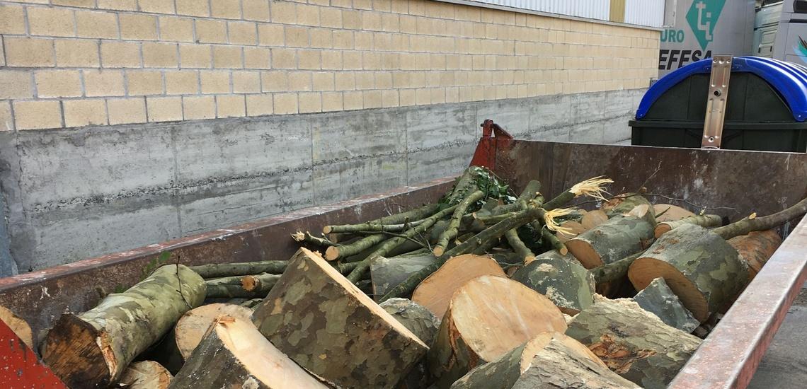 Poda, tala y retirada de madera en Bizkaia