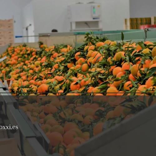 Frutas en Lepe   Jucamp Siglo XXI