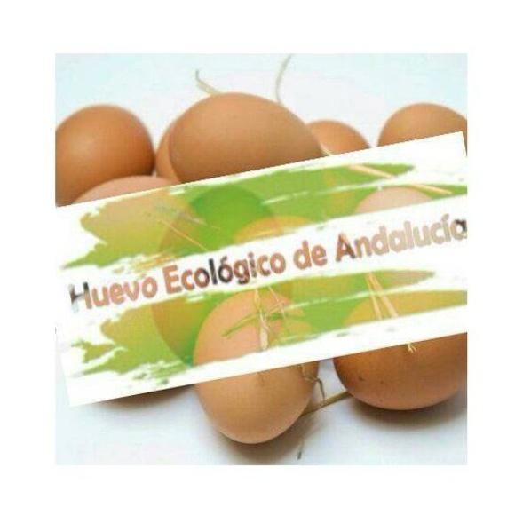 Huevos ecológicos de gallina