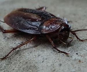 Insectos de temporada en el hogar: cuidado de las tuberías