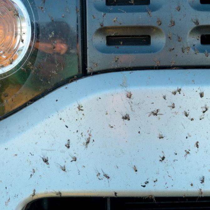Protege tu coche de la acción de los insectos