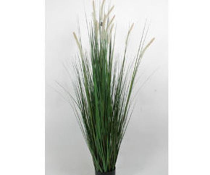 Planta Onion Grass 70cm