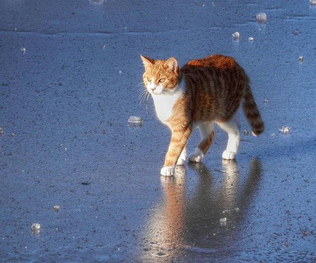 La insuficiencia renal en gatos: a qué debes estar atento